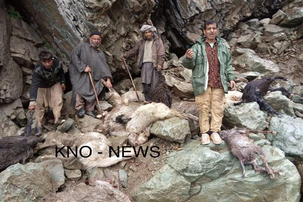 Cloudburst in Tral leaves over 100 sheep, goats dead | KNO